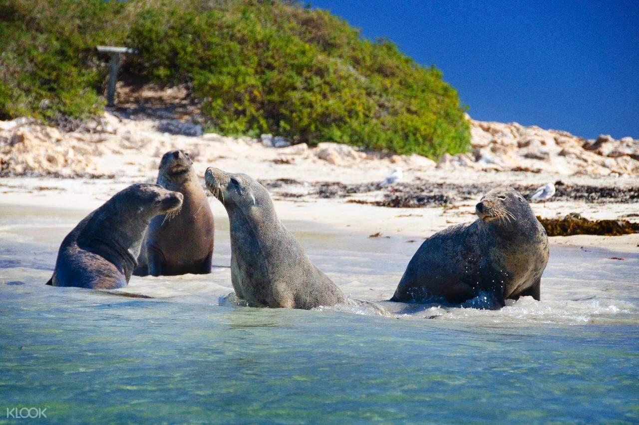 企鹅岛 & 伯斯野生动物园一日游(伯斯出发)
